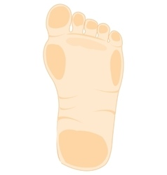 Foot of the person vector