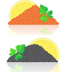 black caviar vector image vector image