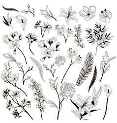 collection of drawn floral design elements vector image