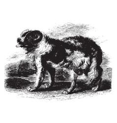 Newfoundland dog vintage vector