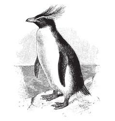 Southern rockhopper penguin vintage vector