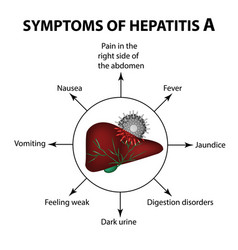 Symptoms of hepatitis a liver virus vector