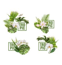 tropic plants banner set vector image