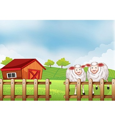 Sheeps inside the wooden fence with a barn vector