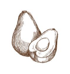 Hand drawn avocado and sliced piece tropical fruit vector