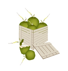 Fresh green coconuts in wooden cargo box vector