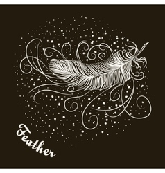 bird feather vector image