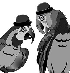 The Dispute of Two Parrots vector image