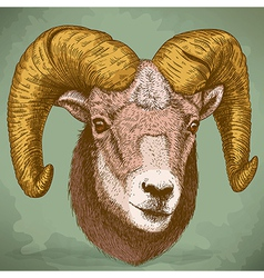 Engraving ram head retro vector