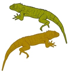 Lizard is goanna silhouette on a white background vector image vector image