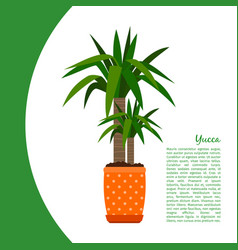 Yucca plant in pot banner vector