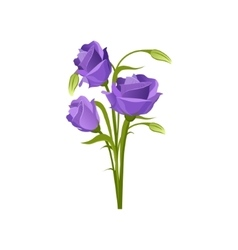 Eustoma hand drawn realistic vector
