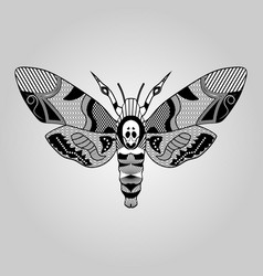 moth acherontia atropos black and white drawing vector image