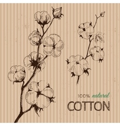 Hand drawn cotton plants on cardboard vector