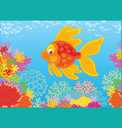 Gold fish on a reef vector