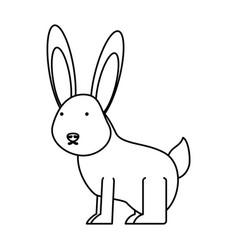 wild rabbit vector image