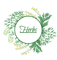 Aromatic medicinal herbs grand wormwood green vector