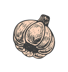 Hand drawn of garlic sketch style doodle vegetable vector