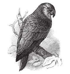 Amazon parrot vintage vector