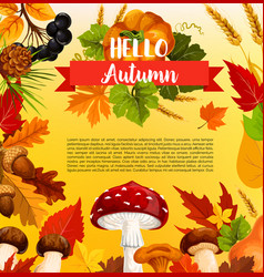 autumn acorn leaf pumpkin greeting poster vector image