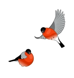 Bullfinch Birds isolated on a white background vector image