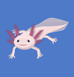 Axolotl pink isolated with four legs on white vector