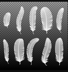 Set of various white bird feathers on a black vector