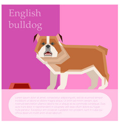 English buldog postcard vector