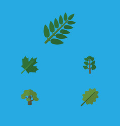 Flat icon ecology set of forest acacia leaf vector