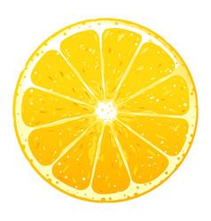 One orange fruite slice vector