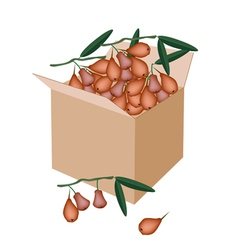 Red water apple in a shipping box vector