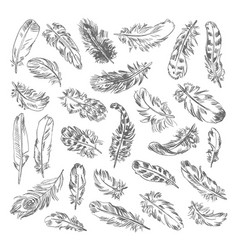 freehand drawing quill vector image vector image