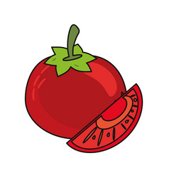 tomato vegetable food fresh vector image vector image