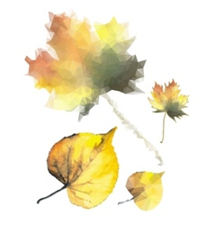 yellow leaves vector image