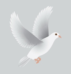 White dove isolated gray vector