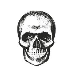 Skull with texture vector