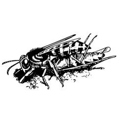 wasp bembex vector image vector image