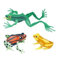 Frog cartoon tropical animals vector image