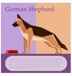 german shepherd colourful postcard vector image