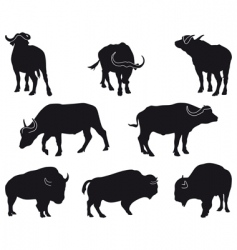 bison and buffalo vector image
