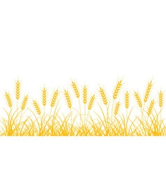 Wheat spikelets vector image