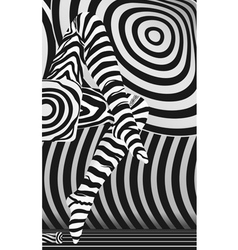 zebra stocking vector image vector image