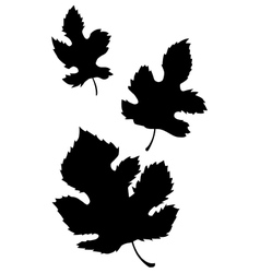 Decorative leaf vector