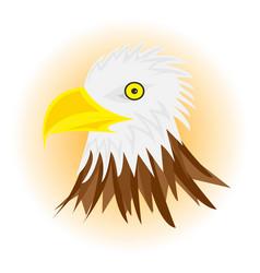 white head eagle vector image