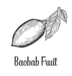 Baobab fruit vector