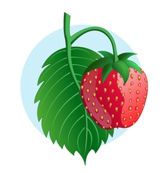 Strawberry on blue background vector