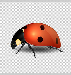 close-up realistic ladybug insect icon vector image vector image