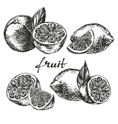 Fruit orange lemon and lime set hand drawn vector