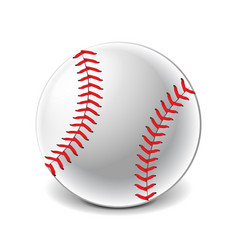 baseball ball isolated on white vector image