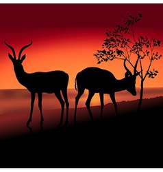 Two antelopes vector